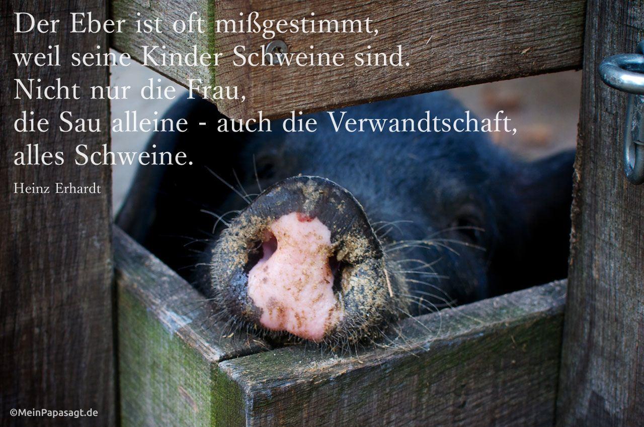 Der Eber ist oft mißgestimmt, weil seine Kinder Schweine sind