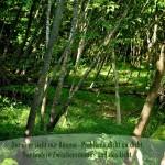 Wald in Italien mit dem Spruch: Der eine sieht nur Bäume - Probleme dicht an dicht. Der andere Zwischenräume - und das Licht.