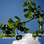 Ginko Baum im Gegenlicht mit dem Romas Zitat: Im Leben sollte man nicht auf die Minuten, sondern auf die Momente achten. Kai Romas