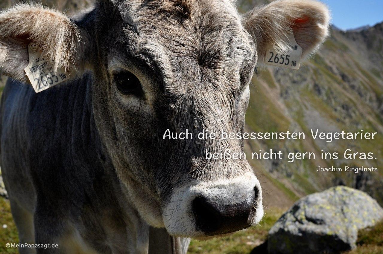 Auch die besessensten Vegetarier beißen nicht gern ins Gras
