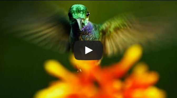 Louie Schwartzberg: Die verborgene Schönheit der Bestäubung – VIDEO