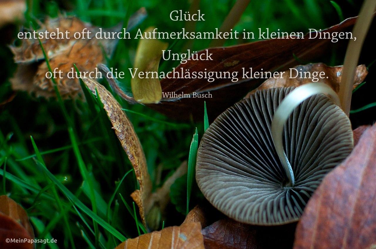Pilz im Berliner Tiergarten mit dem Busch Zitat: Glück entsteht oft durch Aufmerksamkeit in kleinen Dingen, Unglück oft durch die Vernachlässigung kleiner Dinge. Wilhelm Busch