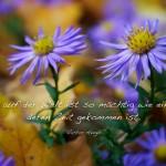 Blumen im Herbstlaub mit dem Victor Hugo Zitat: Nichts auf der Welt ist so mächtig wie eine Idee, deren Zeit gekommen ist. Victor Hugo