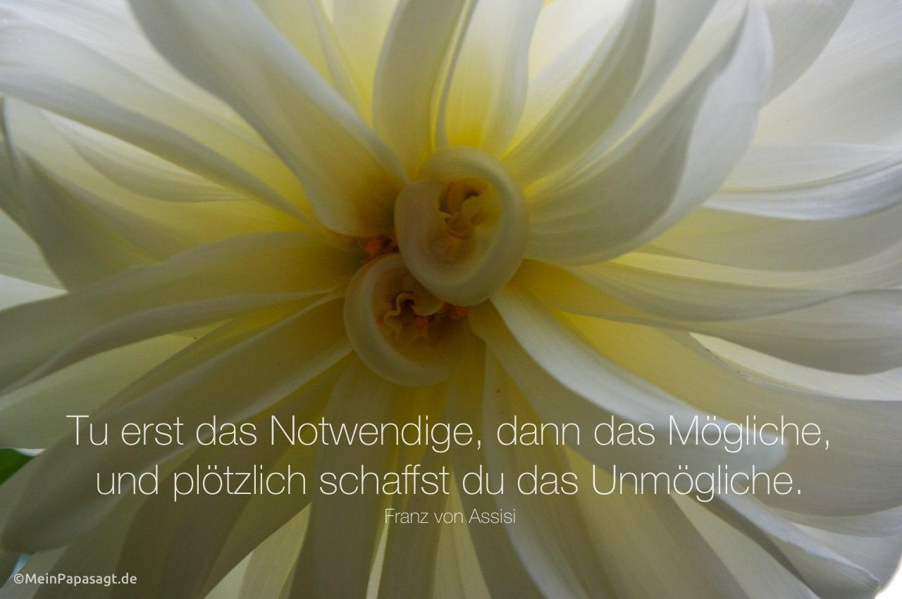 Blütenkelch mit dem Assisi Zitat: Tu erst das Notwendige, dann das Mögliche, und plötzlich schaffst du das Unmögliche. Franz von Assisi