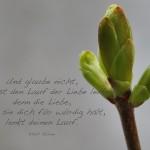 Knospe eines Baumes mit dem Gibran Zitat: Und glaube nicht, du kannst den Lauf der Liebe lenken, denn die Liebe, wenn sie dich für würdig hält, lenkt deinen Lauf. Khalil Gibran