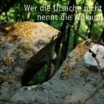 Bemooster Stein im Wald mit dem Mitsch Zitat: Wer die Ursache nicht kennt, nennt die Wirkung Zufall. Werner Mitsch