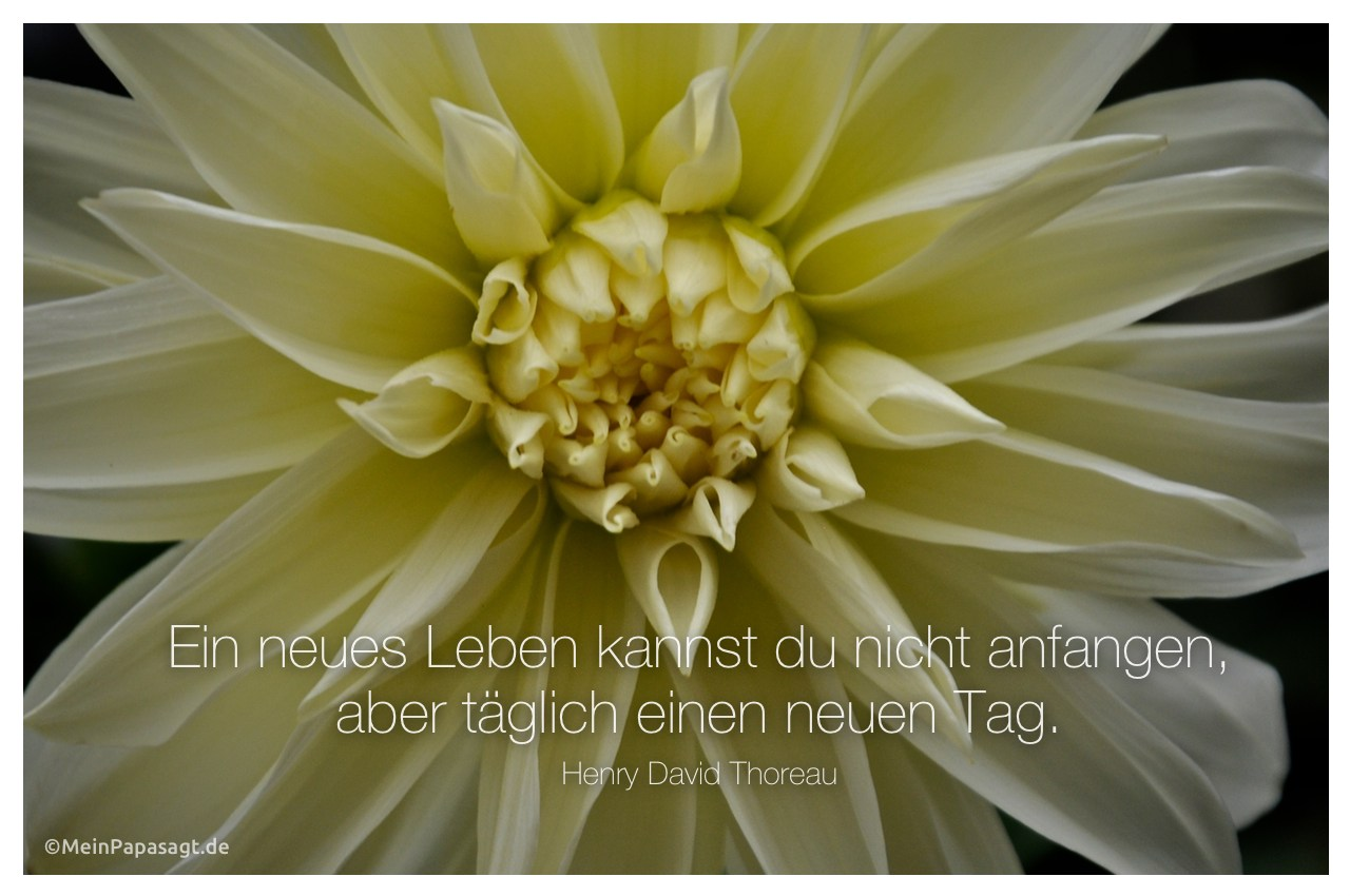 Blütenkelch mit dem Thoreau Zitat: Ein neues Leben kannst du nicht anfangen, aber täglich einen neuen Tag. Henry David Thoreau