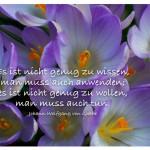 Krokusse -Blütenkelche mit dem Zitat: Es ist nicht genug zu wissen, man muss auch anwenden; es ist nicht genug zu wollen, man muss auch tun. Johann Wolfgang von Goethe