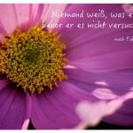 Blütenkelch mit dem Publilius Syros Zitat: Niemand weiß, was er kann, bevor er es nicht versucht hat! nach Publilius Syrus