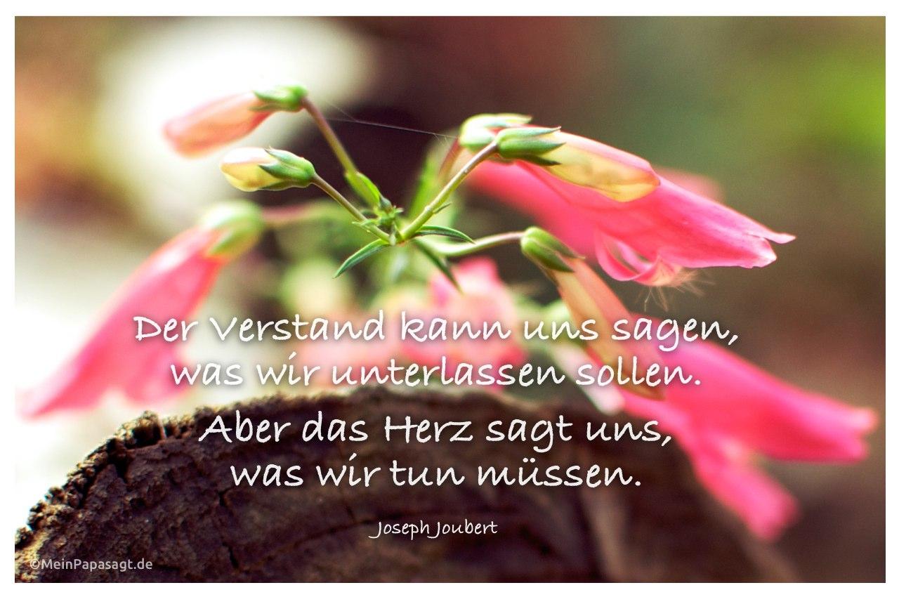Blüten an einem Baumstamm mit dem Zitat: Der Verstand kann uns sagen, was wir unterlassen sollen. Aber das Herz sagt uns, was wir tun müssen. Joseph Joubert