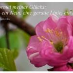 Mandelblüte mit dem Zitat: Die Formel meines Glücks: ein Ja, ein Nein, eine gerade Linie, ein Ziel. Friedrich Nietzsche