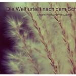 Gräser mit dem Zitat: Die Welt urteilt nach dem Scheine. Johann Wolfgang von Goethe