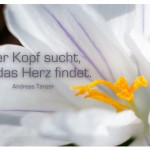Blütenkelch mit dem Zitat: Der Kopf sucht, wo das Herz findet. Andreas Tenzer