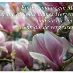 Magnolien mit dem Zitat: Ein Freund ist ein Mensch, der die Melodie deines Herzen kennt und sie dir vorspielt, wenn du sie vergessen hast. Albert Einstein