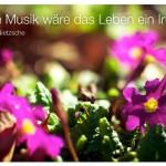 Blumen mit dem Zitat: Ohne Musik wäre das Leben ein Irrtum. Friedrich Nietzsche