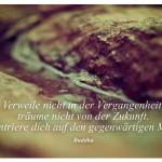 Rinnsal auf einem Stein mit dem Zitat: Verweile nicht in der Vergangenheit, träume nicht von der Zukunft. Konzentriere dich auf den gegenwärtigen Moment. Buddha