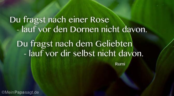 Du fragst nach einer Rose…
