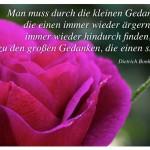 Blütenkelch mit dem Zitat: Man muss durch die kleinen Gedanken, die einen immer wieder ärgern, immer wieder hindurch finden, zu den großen Gedanken, die einen stärken. Dietrich Bonhoeffer