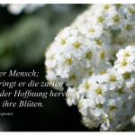 Blüten mit dem Zitat: So ist der Mensch; heute bringt er die zarten Blätter der Hoffnung hervor, morgen ihre Blüten. William Shakespeare