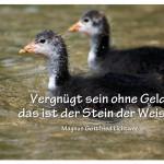Junge Blässhühner mit dem Zitat: Vergnügt sein ohne Geld, das ist der Stein der Weisen. Magnus Gottfried Lichtwer