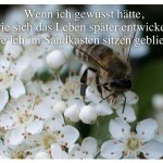 Biene auf einer Blume mit dem Zitat: Wenn ich gewusst hätte, wie sich das Leben später entwickelt, wäre ich im Sandkasten sitzen geblieben.