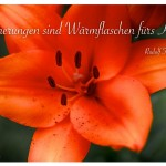 Blütenkelch einer Lilie mit dem Zitat: Erinnerungen sind Wärmflaschen fürs Herz. Rudolf Fernau