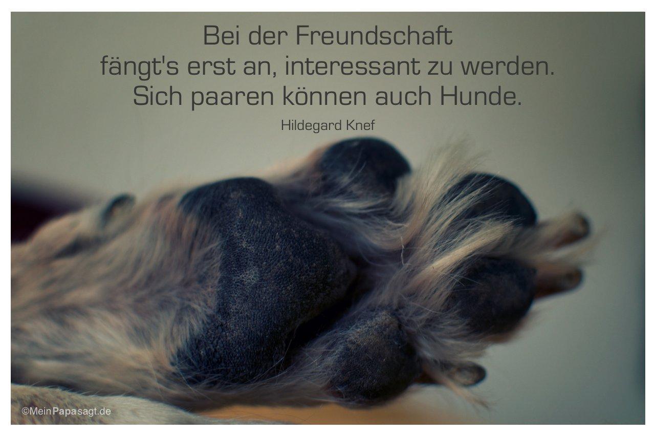 Hundepfote mit dem Zitat: Bei der Freundschaft fängt's erst an, interessant zu werden. Sich paaren können auch Hunde. Hildegard Knef
