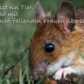 Die Maus ist ein Tier...