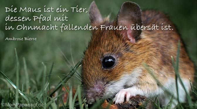 Die Maus ist ein Tier…