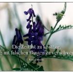 Blumen am Kornfeld mit dem Zitat: Die Zeit ist zu kostbar, um sie mit falschen Dingen zu verschwenden. Heinz Rühmann
