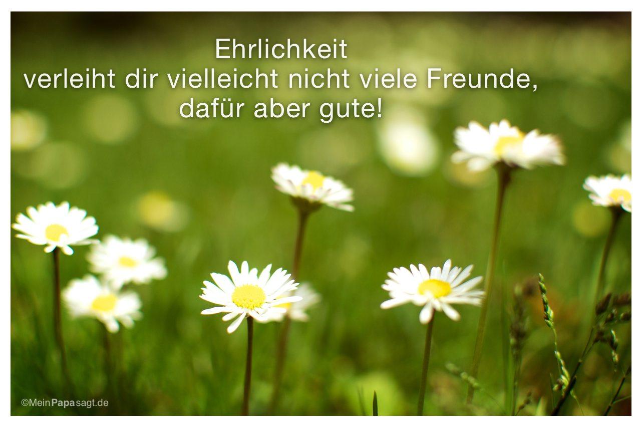 Gänseblümchen mit dem Spruch: Ehrlichkeit verleiht dir vielleicht nicht viele Freunde, dafür aber gute!