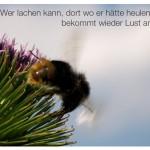 Hummel auf Blüte mit dem Zitat: Wer lachen kann, dort wo er hätte heulen können, bekommt wieder Lust am Leben. Werner Finck