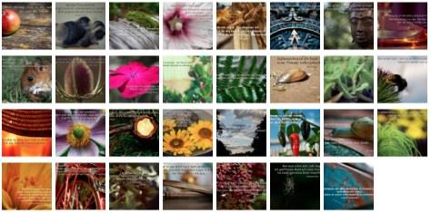 Übersichtsbild. Bilder Galerie mit Weisheiten, Zitaten und Sprüchen August 2014