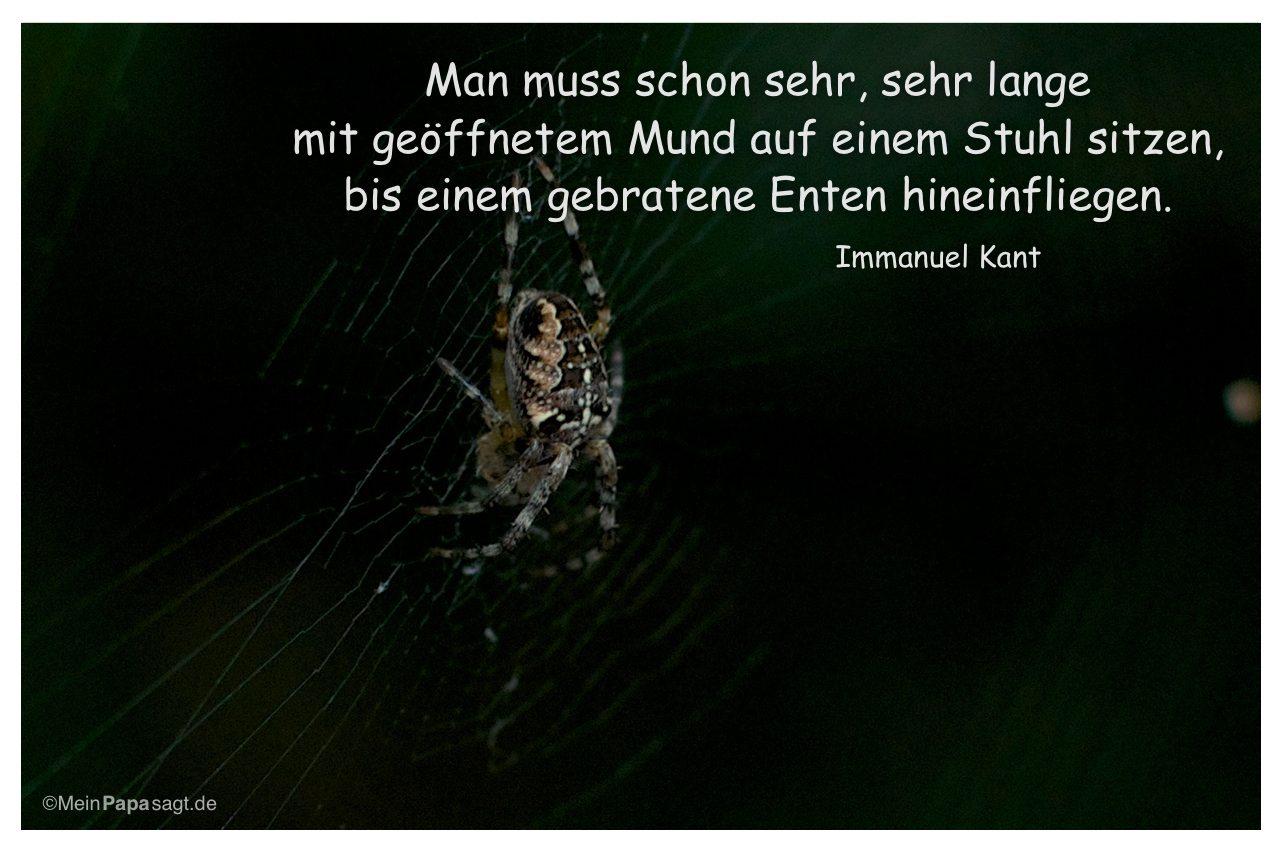 Spinne mit dem Zitat: Man muss schon sehr, sehr lange mit geöffnetem Mund auf einem Stuhl sitzen, bis einem gebratene Enten hineinfliegen. Immanuel Kant