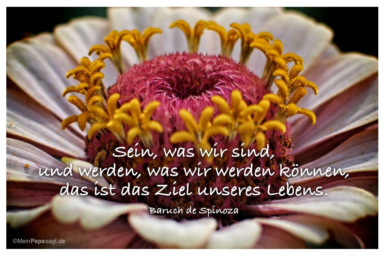 Blütenkelch mit dem Zitat: Sein, was wir sind, und werden, was wir werden können, das ist das Ziel unseres Lebens. Baruch de Spinoza