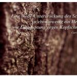 Baumrinde mit dem Zitat: Eine bloße Unterdrückung des Schattens ist ebensowenig ein Heilmittel wie Enthauptung gegen Kopfschmerzen. Carl-Gustav Jung