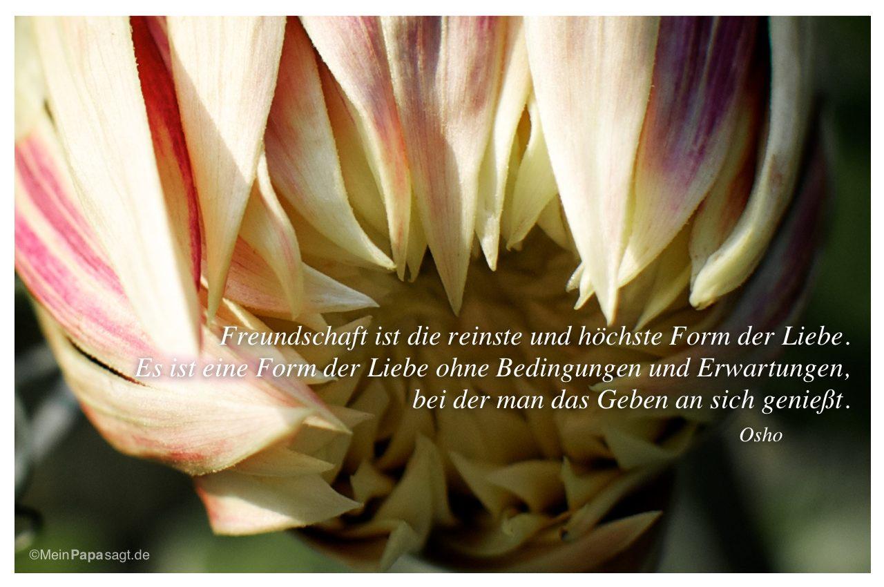 Freundschaft ist die reinste und höchste Form der Liebe ...