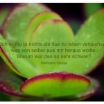 Geldbaum mit dem Zitat: Ich wollte ja nichts als das zu leben versuchen, was von selber aus mir heraus wollte. Warum war das so sehr schwer? Hermann Hesse