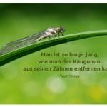 Libelle mit dem Zitat: Man ist so lange jung, wie man das Kaugummi aus seinen Zähnen entfernen kann.Walt Disney
