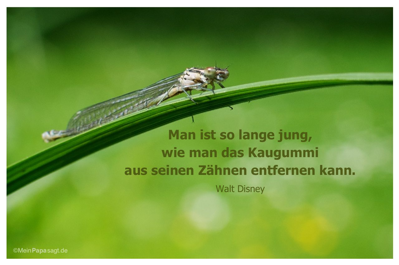 Libelle mit dem Zitat: Man ist so lange jung, wie man das Kaugummi aus seinen Zähnen entfernen kann. Walt Disney