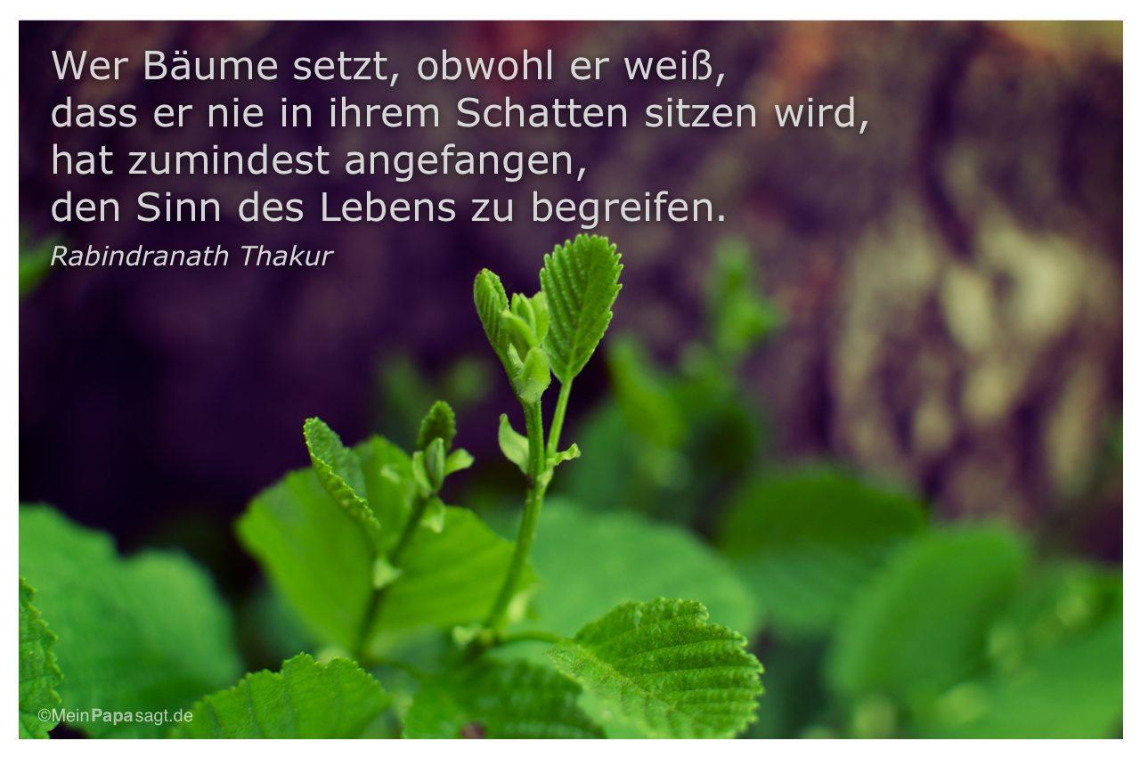 Junger Baum mit dem Zitat: Wer Bäume setzt, obwohl er weiß, dass er nie in ihrem Schatten sitzen wird, hat zumindest angefangen, den Sinn des Lebens zu begreifen. Rabindranath Thakur