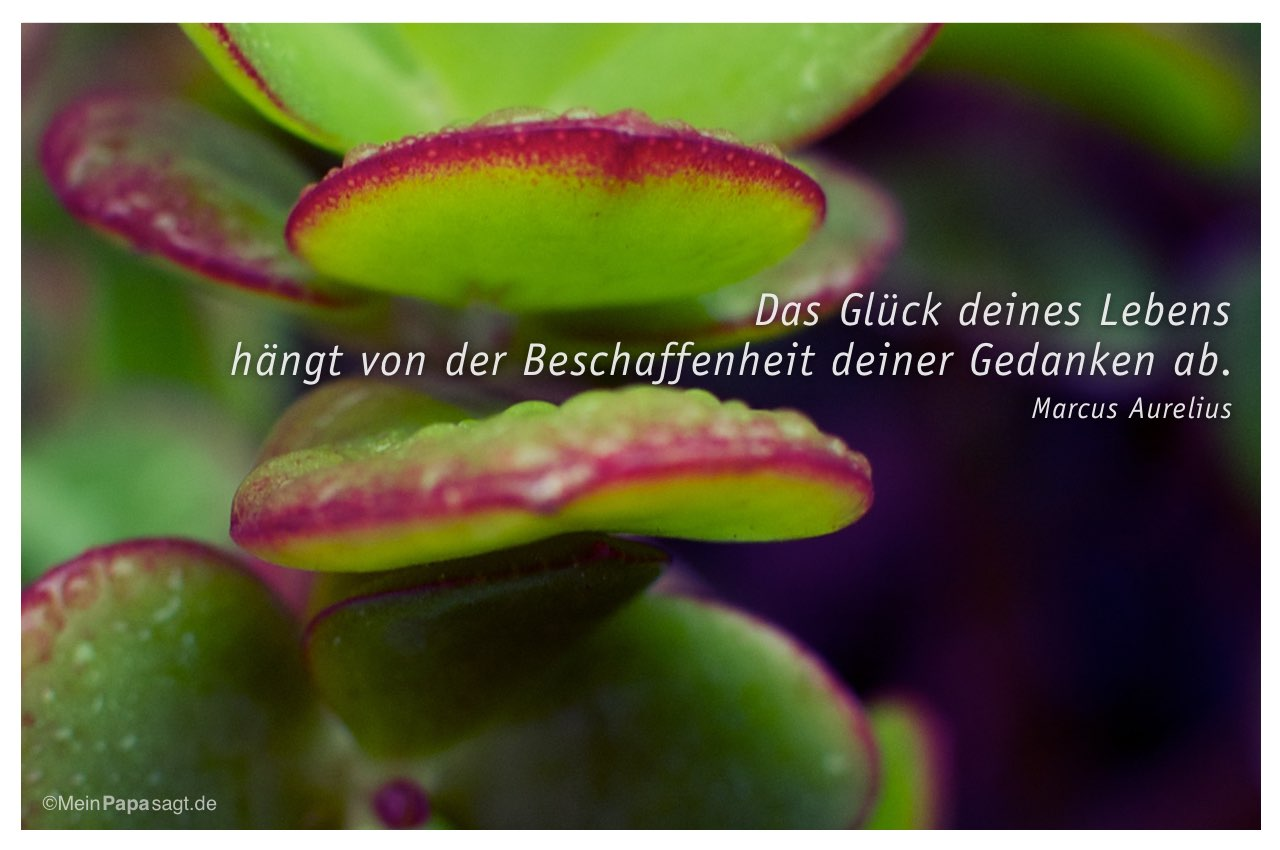 Geldbaum mit dem Marcus Aurelius Zitat: Das Glück deines Lebens hängt von der Beschaffenheit deiner Gedanken ab. Marcus Aurelius