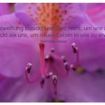 Blütenkelch mit dem Hermann Hesse Zitat: Die Verzweiflung schickt uns Gott nicht, um uns zu töten, er schickt sie uns, um neues Leben in uns zu erwecken. Hermann Hesse