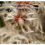 Pflanze mit dem George Bernard Shaw Zitat: Ihr aber seht und sagt: Warum? Aber ich träume und sage: Warum nicht? George Bernard Shaw