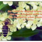Biene auf einer Blüte mit dem Kurt Tucholsky Zitat: Der Vorteil der Klugheit besteht darin, dass man sich dumm stellen kann. Das Gegenteil ist schon schwieriger. Kurt Tucholsky