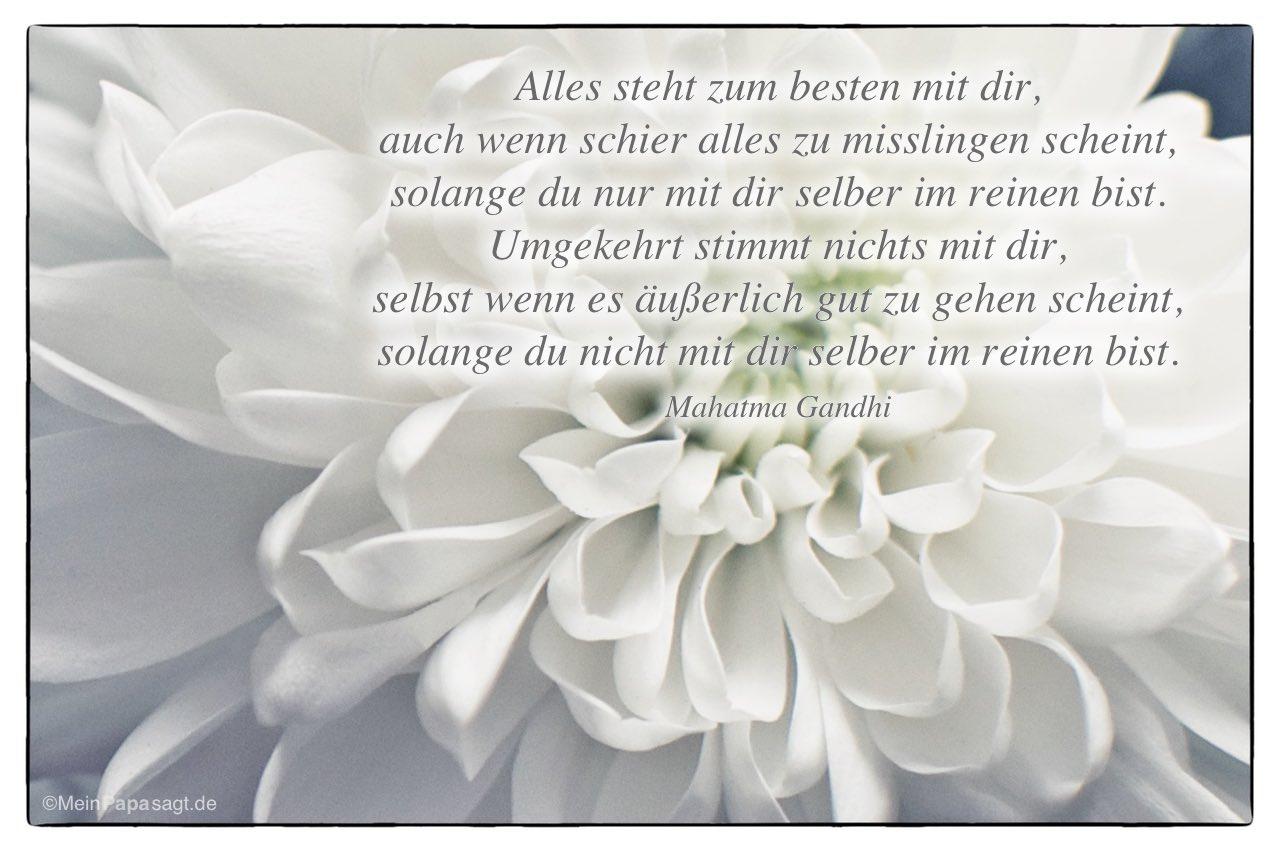 Chrysanthemen mit dem Mahatma Gandhi Zitat: Alles steht zum besten mit dir, auch wenn schier alles zu misslingen scheint, solange du nur mit dir selber im reinen bist. Umgekehrt stimmt nichts mit dir, selbst wenn es äußerlich gut zu gehen scheint, solange du nicht mit dir selber im reinen bist. Mahatma Gandhi