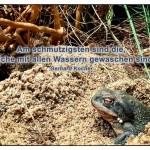 Frosch mit dem Gerhard Kocher Zitat: Am schmutzigsten sind die, welche mit allen Wassern gewaschen sind. Gerhard Kocher