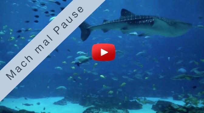 Mach mal Pause <br>Ozean Aquarium