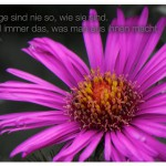 Blüte mit dem Jean Anoulih Zitat: Die Dinge sind nie so, wie sie sind. Sie sind immer das, was man aus ihnen macht. Jean Anoulih