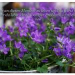 Blumen mit dem Osho Zitat: Fange an diesen Moment zu leben und du wirst sehen - je mehr du lebst, desto weniger Probleme wird es geben. Osho